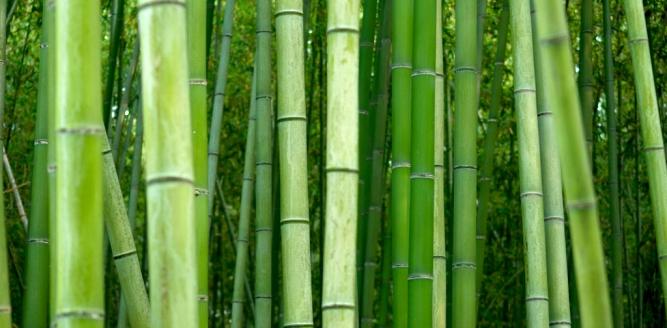 aquafill_bamboo