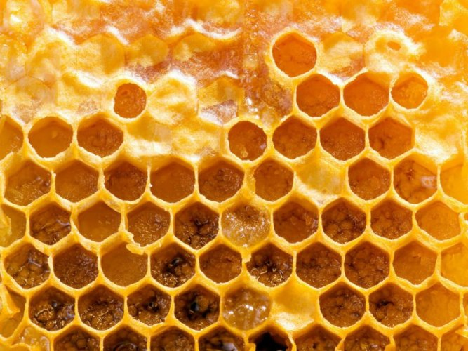 propolis-the-ancient-healer.jpg